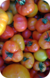 the Ledson's Family CSA Farm Heirloom Tomatoes
